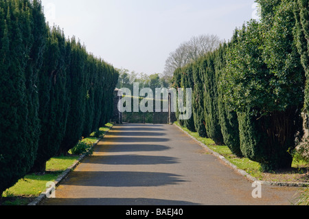 Yew-lined driveway at Saul Church, Portadown, built in 1932 on the site of St Patrick's first church in Ireland. - Stock Photo