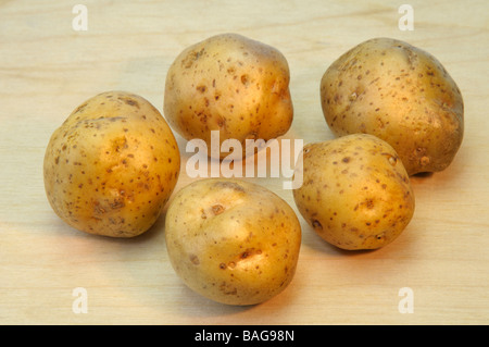 Potato (Solanum tuberosum), variety: La Bonnotte, studio picture - Stock Photo
