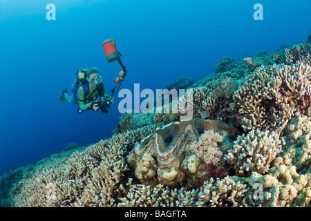Diver and Giant Clam Tridacna Squamosa Micronesia Palau - Stock Photo