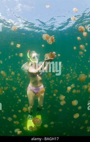 Woman in Jellyfish Lake Mastigias papua etpisonii Jellyfish Lake Micronesia Palau - Stock Photo