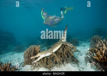 Skin Diver meets Saltwater Crocodile Crocodylus porosus Micronesia Palau