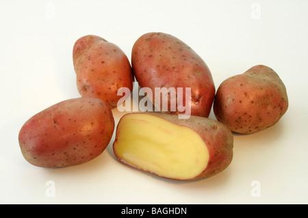 Potato (Solanum tuberosum), variety: Cherie, studio picture - Stock Photo