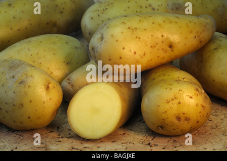 Potato (Solanum tuberosum), variety: La Ratte d Ardeche, studio picture - Stock Photo