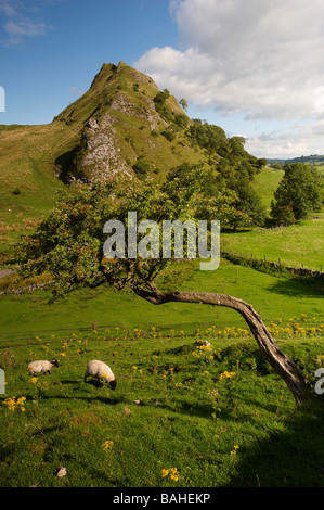 Parkhouse Hill from Chrome Hill, Peak District National Park, Derbyshire, England - Stock Photo