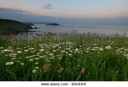 A proliferation of springtime flowers on a clifftop is covered in the dawn dew, with Burgh island in the background - Stock Photo