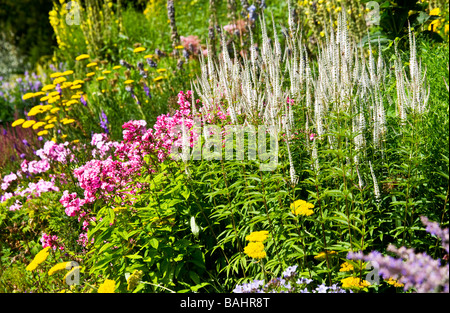 Tall spikes of yellow flowers of the july flowering for Plant with tall spikes of yellow flowers