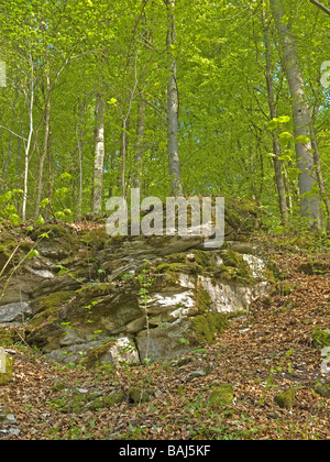 wildlife park Franconian Switzerland with stone at moss in North Bavaria Upper Franconia Germany - Stock Photo