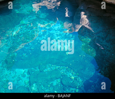 surreal reflections on the water surface of a turquoise coloured waterpool of Wadi Bani Khalid - Stock Photo