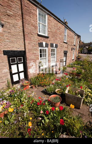 UK Gloucestershire Forest of Dean Blakeney village centre colourful spring flowers in small front garden - Stock Photo