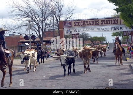 Longhorn Cattle Drive. Fort Worth Stockyards. Texas USA - Stock Photo