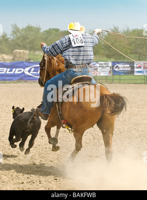 Man trying to lasso calf at rodeo event - Stock Photo