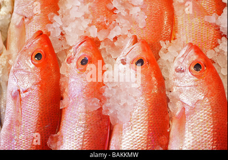 Rows of Delicious Red Snapper Fish at a Seafood Market - Stock Photo