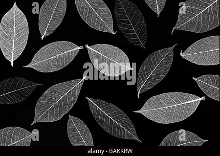 Skeleton leaves pattern. Black and White - Stock Photo
