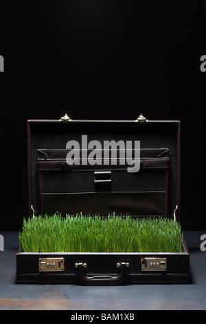 Grass in briefcase - Stock Photo