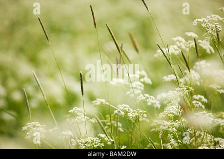 Close up of wild plants - Stock Photo