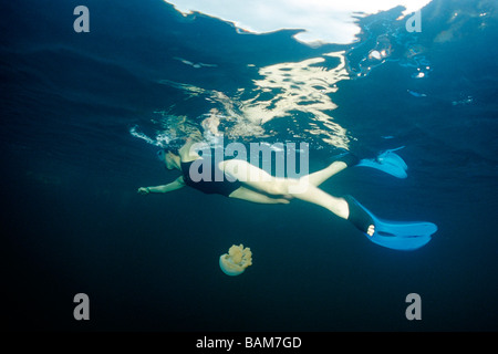 Swimmer and Jellyfish Mastigias spec Pacific Micronesia Palau - Stock Photo