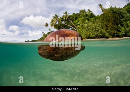 Coconut float in Lagoon Kadavu Island Fiji - Stock Photo