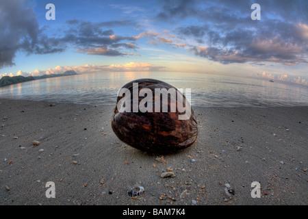 Coconut at Beach Kadavu Island Fiji - Stock Photo