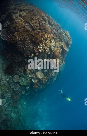 Freediver explores Coral Reef Raja Ampat West Papua Indonesia - Stock Photo