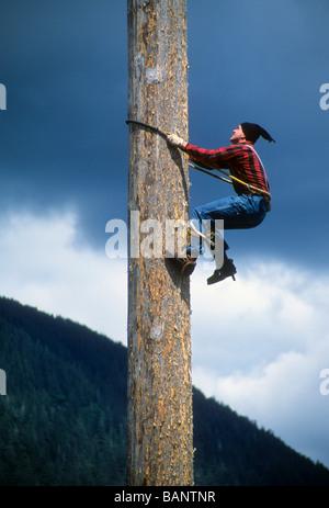 Lumberjack log tree climb rope Alaska danger show risk thrill tall high demo sport speed - Stock Photo