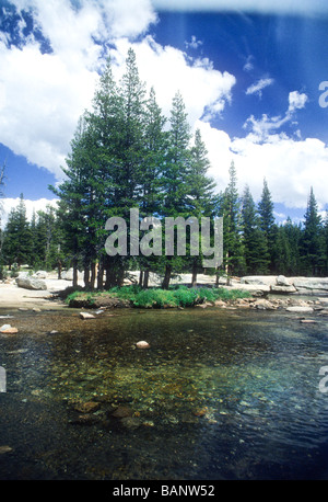 Yosemite National Park Tuolomne meadows forest stream river tree pine blue sky cloud pure fresh air government recreation - Stock Photo