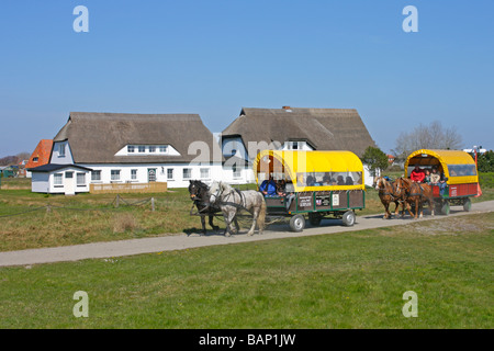 horse-drawn carriages at Neuendorf, Hiddensee Island, Mecklenburg Western-Pomerania - Stock Photo