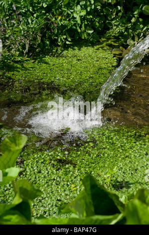 water feature in english garden - Stock Photo