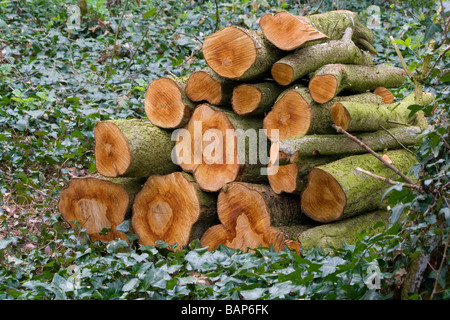 Log pile left on forest floor to provide shelter for small animals and enrich the soil - Stock Photo