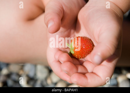Child (female 2.5 years) holds ripe strawberry in hands, North Vancouver, BC - Stock Photo