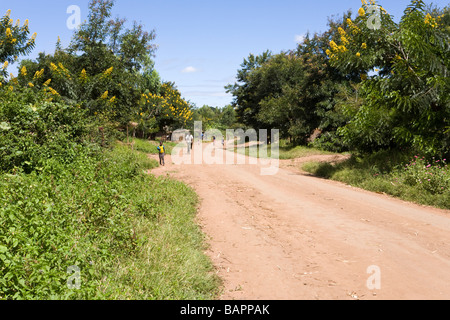 Acacia trees in flower beside the dirt track road through the village of Nyombe, Malawi, Africa - Stock Photo