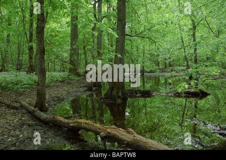 Habitat od European concern: Riparian mixed forest - Stock Photo