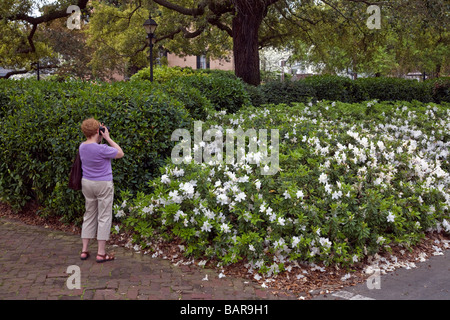 Lady Is Taking Photos Of The Blooming Azaleas In Savannah Georgia USA Southern America