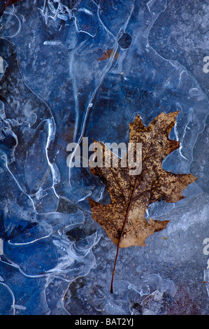a frozen leaf in ice - Stock Photo