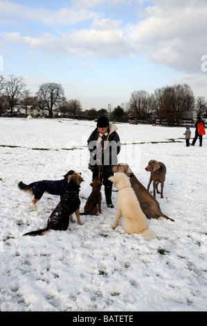 Professional dog walker with six dogs waiting for a treat in snow,Springfield park Hackney,London E5 - Stock Photo