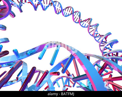Circular DNA (deoxyribonucleic acid) molecule,computer artwork. Circular DNA has no ends, but consists of a ring - Stock Photo