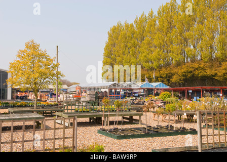 Wonderful A General View Of The Early Dawn Nurseries Garden Centre With Bird  With Excellent  A General View Of The Early Dawn Nurseries Garden Centre Selling  Gardening Goods And Plants Etc With Amazing Garden Guru Also Highways Garden Centre In Addition Garden Key Safe And Garden Magazine As Well As Garden Furniture Paint Ideas Additionally Xbox Garden Warfare From Alamycom With   Excellent A General View Of The Early Dawn Nurseries Garden Centre With Bird  With Amazing  A General View Of The Early Dawn Nurseries Garden Centre Selling  Gardening Goods And Plants Etc And Wonderful Garden Guru Also Highways Garden Centre In Addition Garden Key Safe From Alamycom