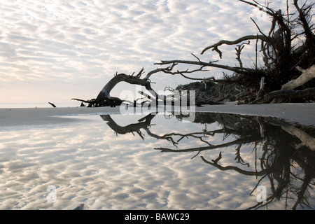Clouds and tidal pool reflections on Driftwood Beach - Jekyll Island, Georgia - Stock Photo