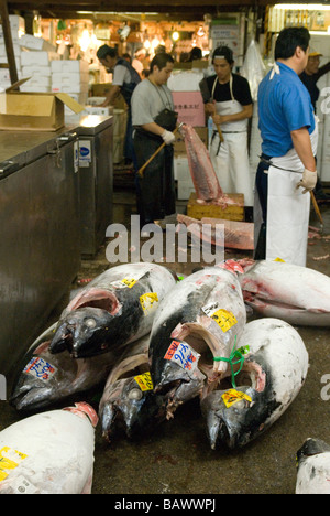 Workers in the Tsukiji fish market Tokyo Japan with whole frozen tuna fish - Stock Photo