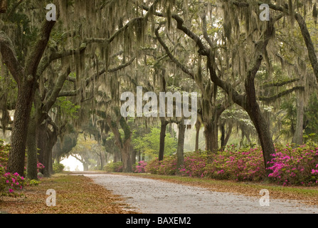 Bonaventure Cemetery in Savannah Georgia - Stock Photo