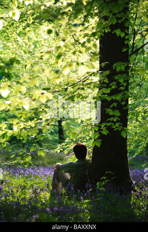 Man sitting in Bluebells in flower in springtime woodland at Upper Soudley in the Forest of Dean - Stock Photo