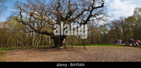 The Major Oak, Sherwood Forest, near Edwinstowe, Nottinghamshire, England, UK - Stock Photo