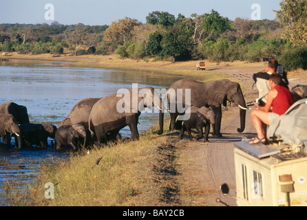 Tourists watching african elephants passing the river Chobe, Botswana, Africa - Stock Photo