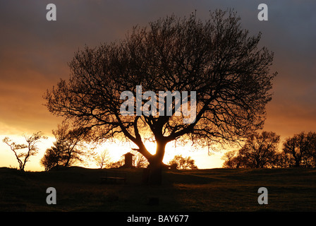 Tree at sunset in Tusculum - Stock Photo