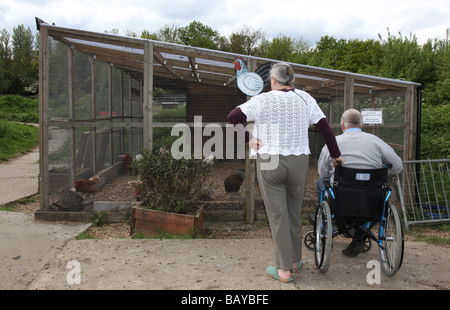 Lady with her wheelchair bound husband on an outing to a farm coping with a disability - Stock Photo