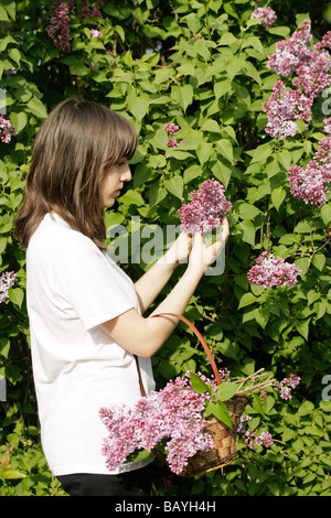 young woman smelling white lilacs, circa 1894 Stock Photo: 52655713 ...