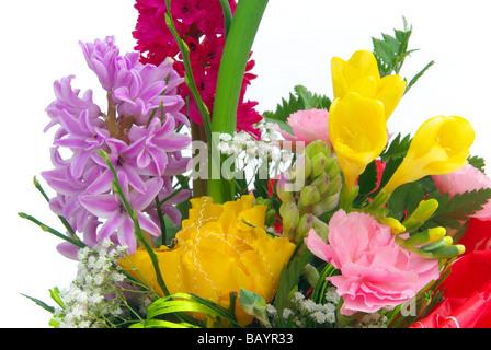 Hyazinthe hyacinth 04 - Stock Photo