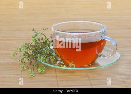 Tee Hirtentäschel tea shepherds purse 03 - Stock Photo
