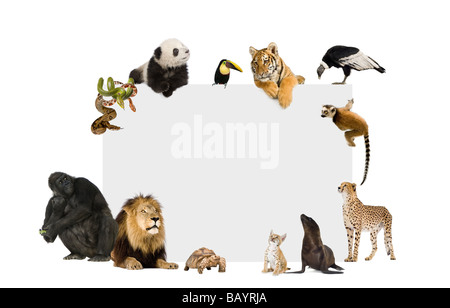 Group of wild animals around a blank poster in front of a white background - Stock Photo