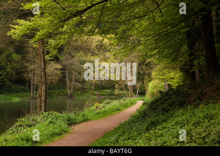 UK Gloucestershire Forest of Dean Soudley Ponds Nature Reserve - Stock Photo