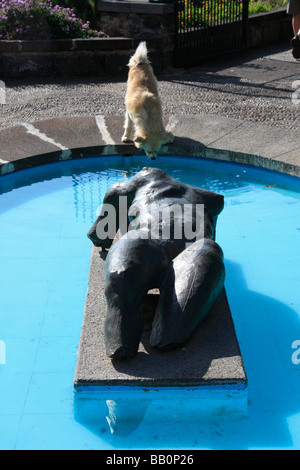 dog drinking from pool funchal madeira seaside city portuguese island in the mid Atlantic Ocean - Stock Photo